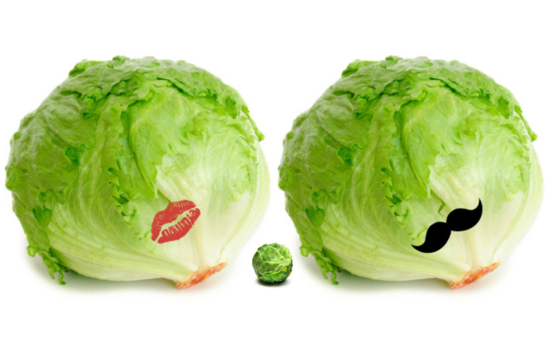 The Lettuces: We're Pregnant!
